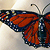 Monarch Butterfly Necklace - Acrylic And Enamel On Molded Canvas And Leather