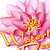 Waterlily Designs logo